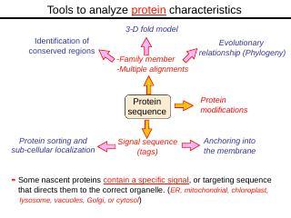 Bioinformatics Lecture 2